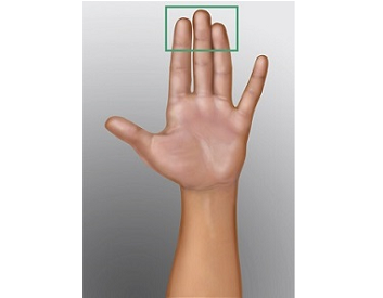 Figure 3. The pads of the 3 middle fingers of your hand