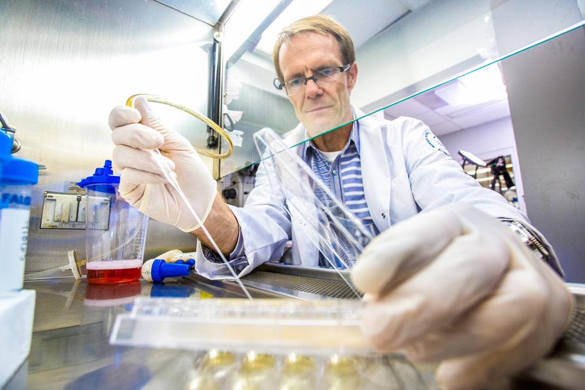 Center for Stem Cell Biology   Memorial Sloan Kettering