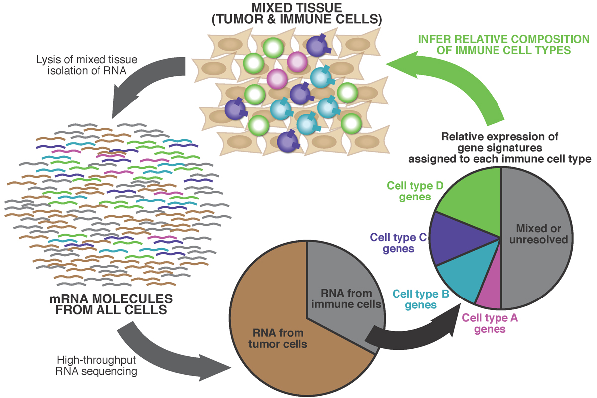 From a bulk tumor sample, mRNA molecules are extracted from the mix of immune cells and non-immune cells.