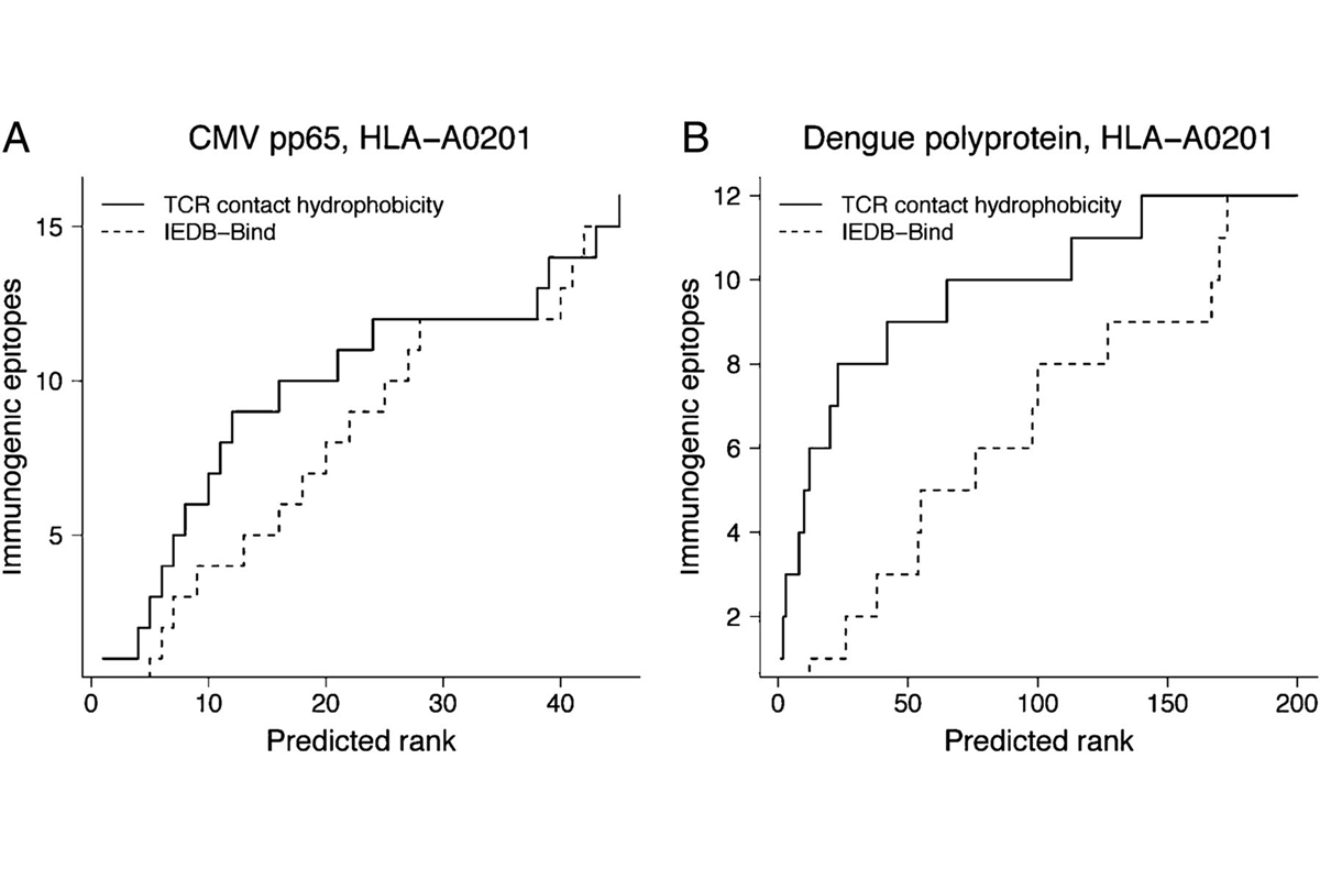 Charts of CMV pp65, HLA-A0201 and Dengue polyprotein, HLA-A0201 Immunaogenic epitopes rank predictions