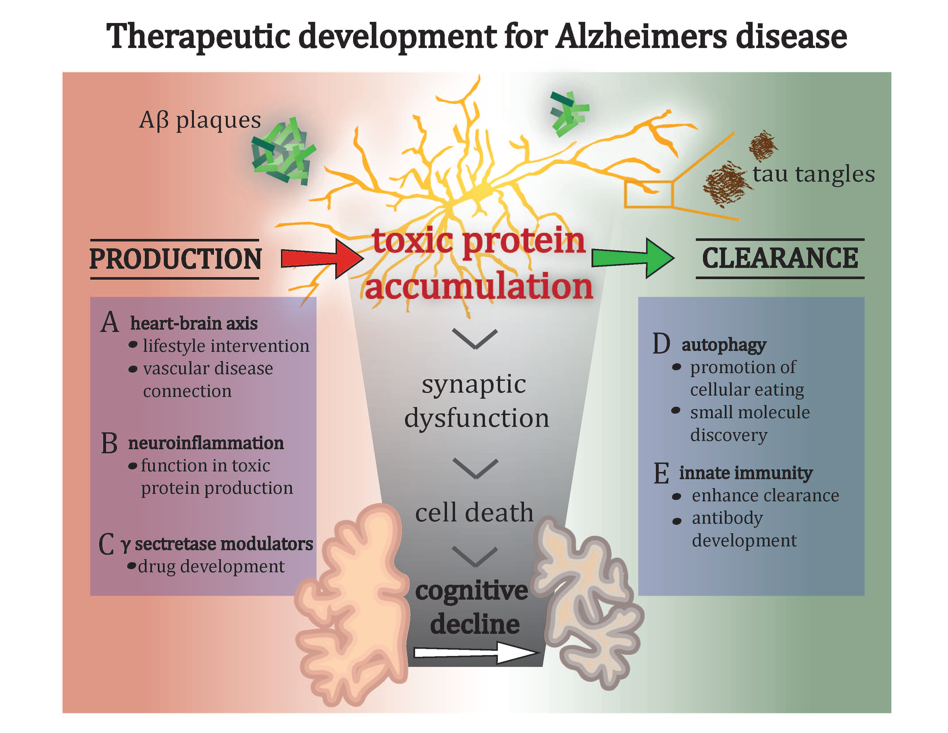 Theraputic Development for Alzheimers Disease