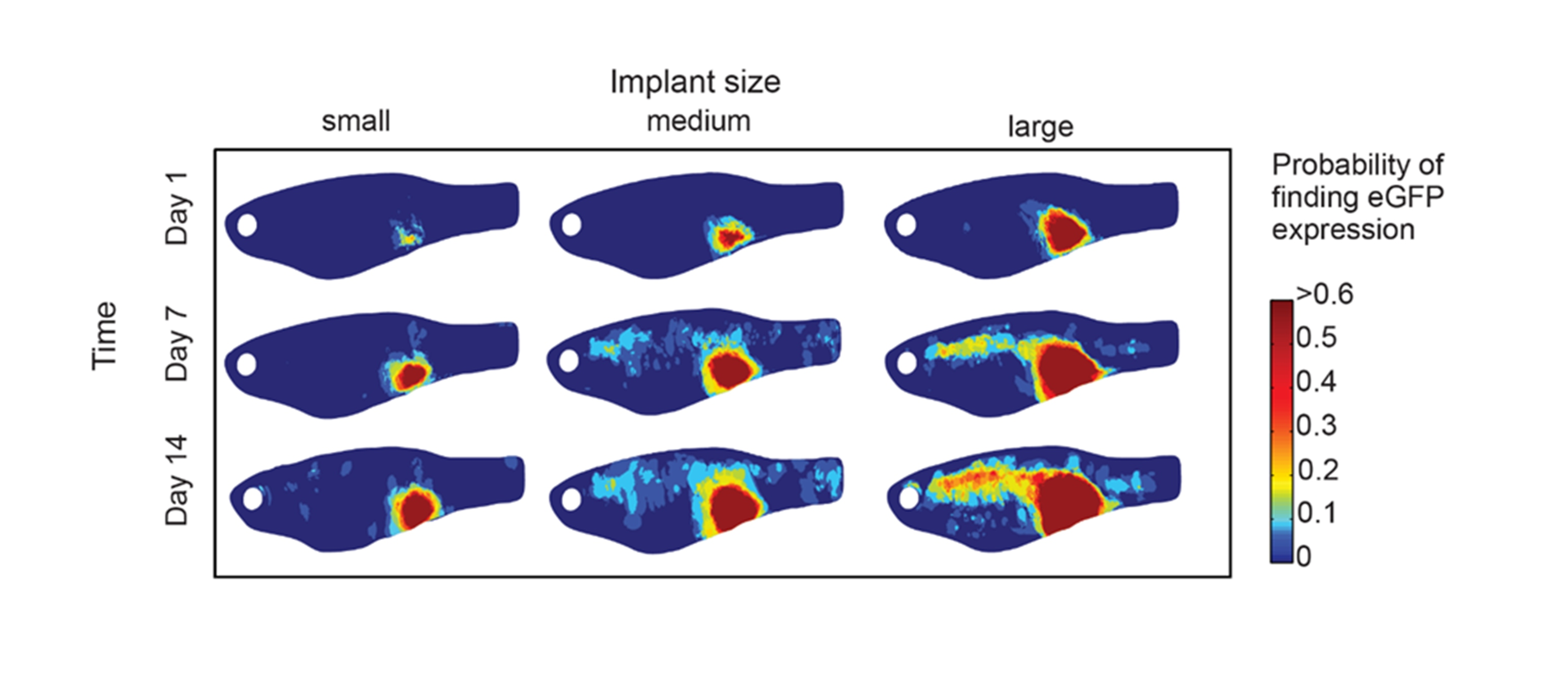 Advances in zebrafish imaging