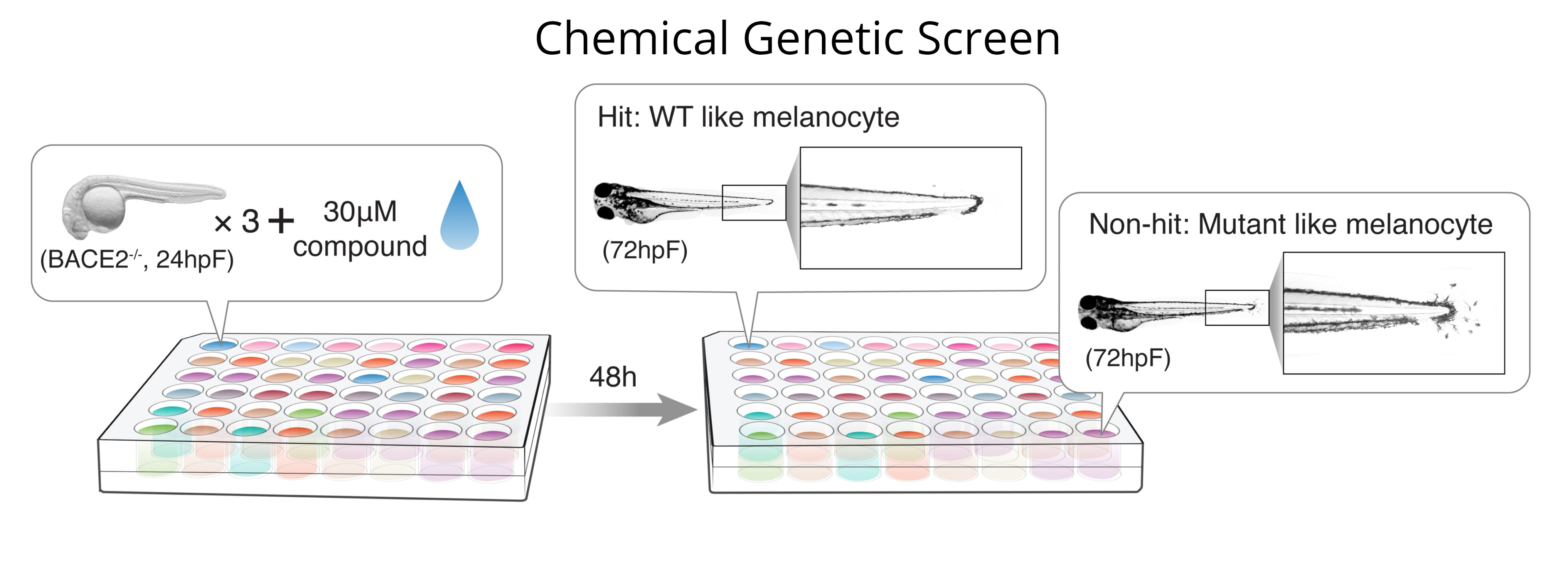 Chemical Genetic Screen