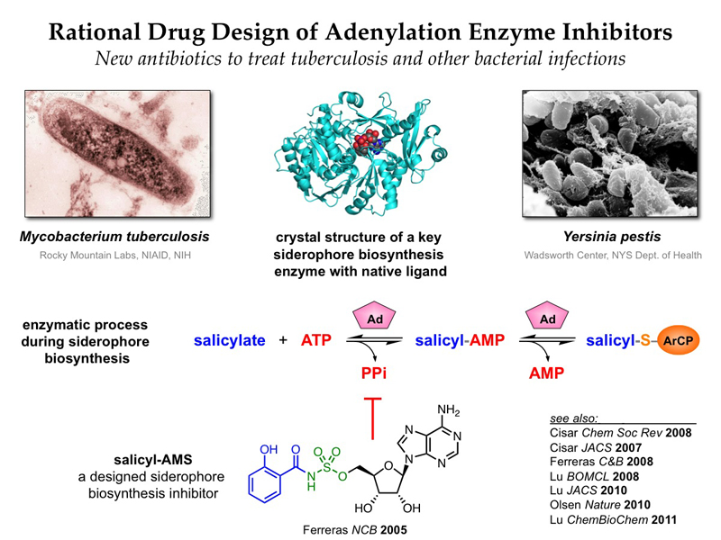 Rational drug design of sulfonyladenosine inhibitors of adenylation enzymes