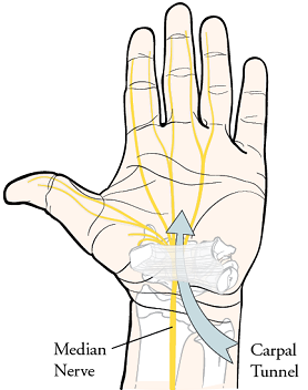 Figure 1: Carpal tunnel
