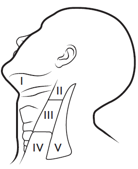 Figure 1. Levels of lymph nodes