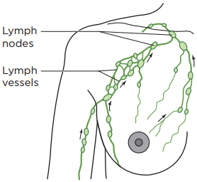 Figure 1. Normal lymph drainage