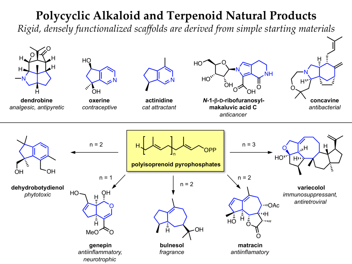alkaloid and terpenoid biosynthesis for diversity-oriented synthesis and chemical biology