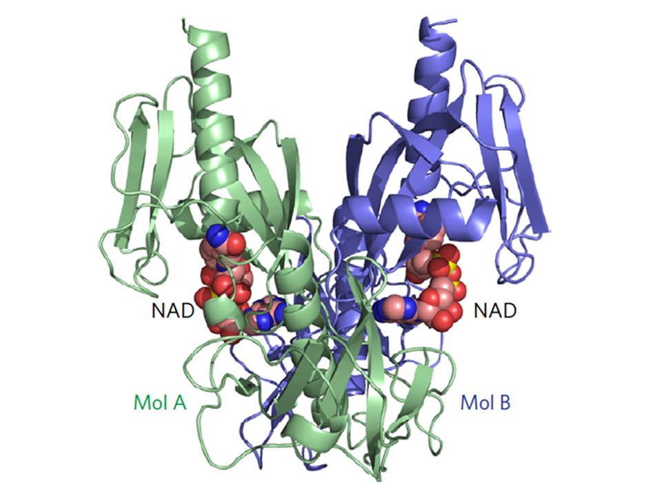 Structure and function of the bacterial decapping enzyme NudC