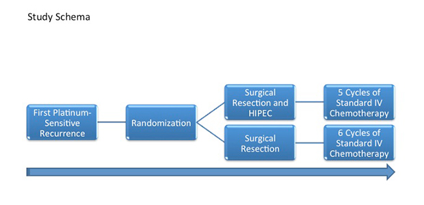 Figure 2. MSK randomized phase II study scheme.