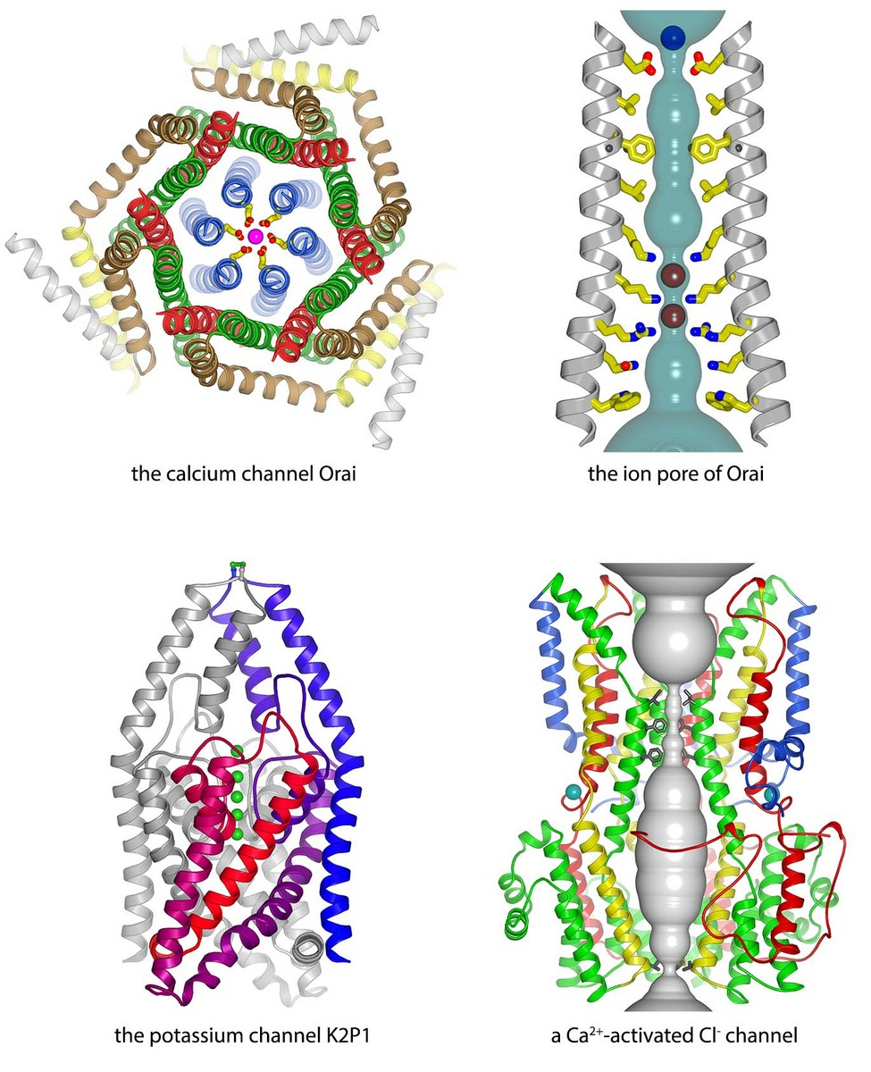 X-ray structures of eukaryotic calcium, potassium, and chloride channels determined in the lab