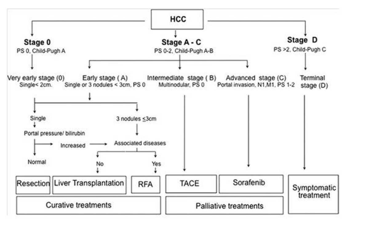 Figure 1 -- BCLC staging system for management of HCC (adapted from Forner et al.5).  HCC, hepatocellular carcinoma; PS, performance score; RFA, radiofrequency ablation; TACE, transarterial chemoembolization.