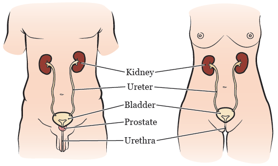 About Your Bladder Surgery With a Neobladder | Memorial