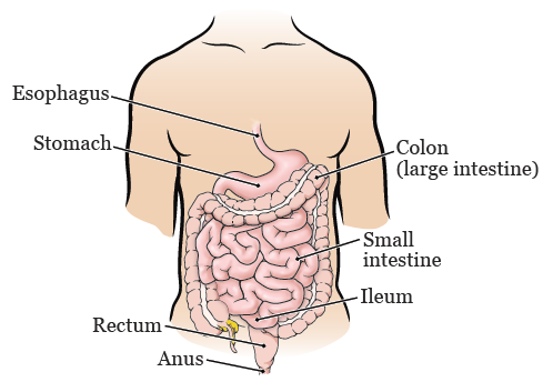 About Your Colon Resection Surgery | Memorial Sloan