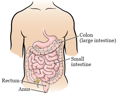 About Your Endoscopic Submucosal Dissection Esd With A
