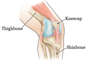 Figure 1. The parts of your knee