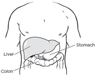 Figure 1. Your liver