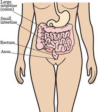Figure 1. Your gastrointestinal system