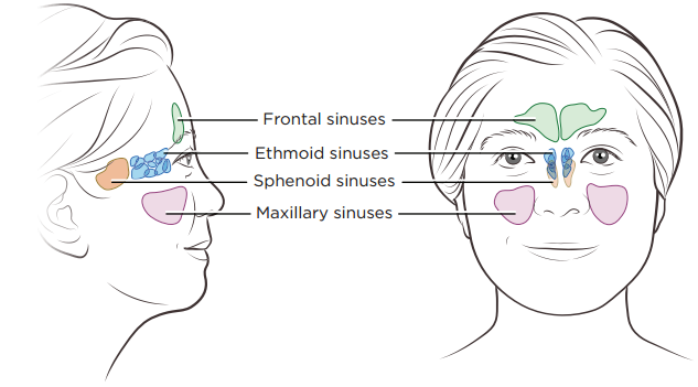 About Your Nasal Cavity and Paranasal Sinus Surgery | Memorial Sloan