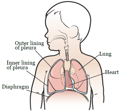 Figure 1. Your thorax