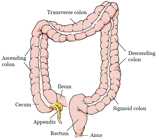 cancer and abdominal hysterectomy)