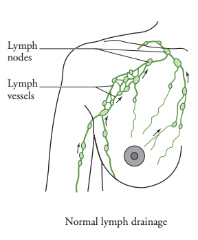 Normal lymph drainage