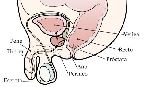 orina para cáncer de próstata saludable