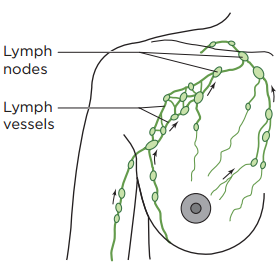 Figure 1. Your lymphatic system in your breast