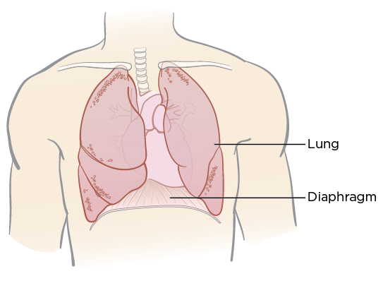 Figure 1. Your diaphragm