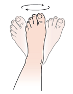 Figure 1. Ankle circles