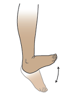 Figure 2. Ankle pumps