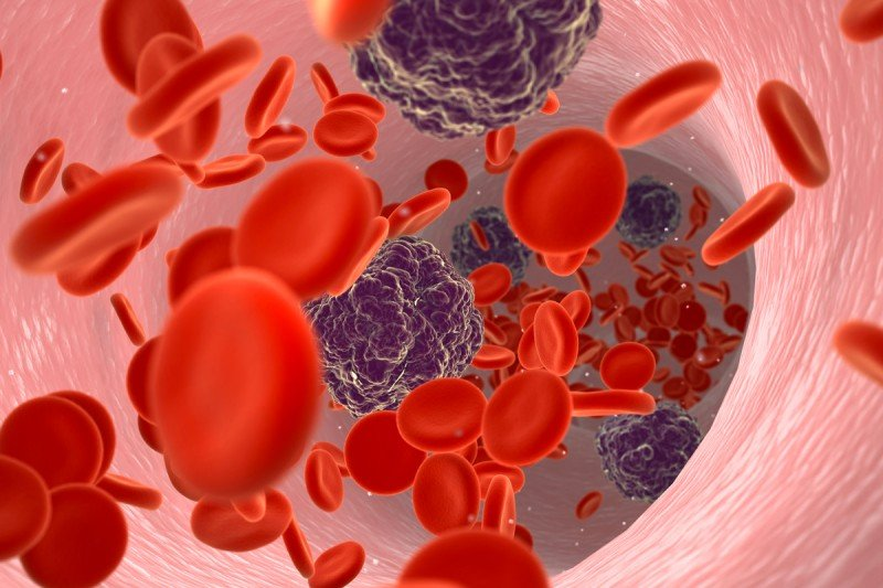 Illustration of normal blood cells (red discs) along with cancer cells (black spheres) floating through a blood vessel.