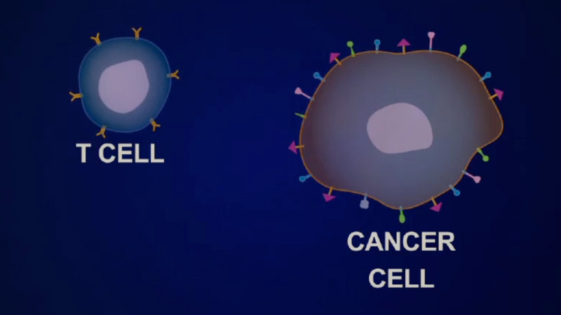 Animated video shows how Memorial Sloan Kettering researchers are using genetically engineered T-cells to recognize and attack cancer.