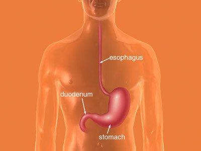 Three white arrows pointing to the esophagus, duodenum, and stomach.