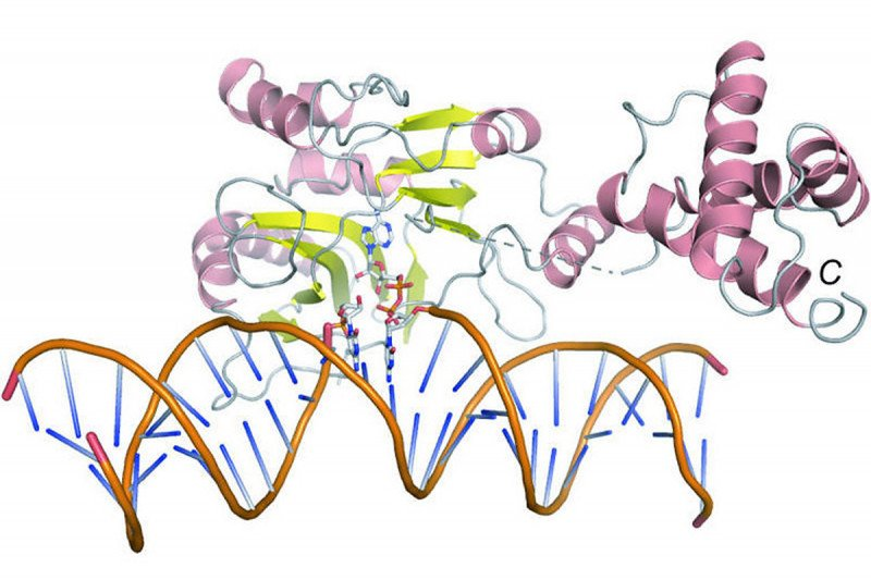 Structure of Rnl2 bound to a nicked adenylated substrate