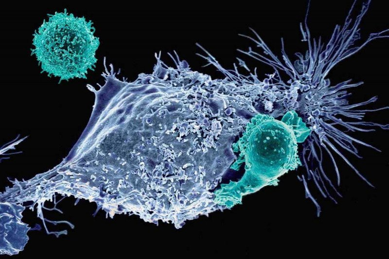 CAR T cells attacking cancer