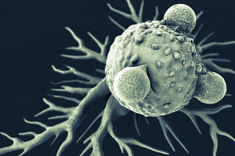Grey T lymphocytes