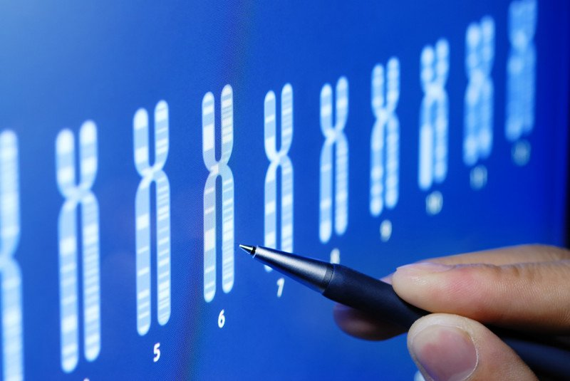A scientist looks at illustrations of chromosomes.