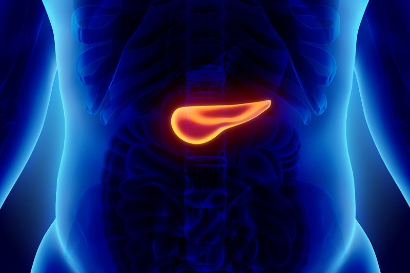 An illustration of the human pancreas