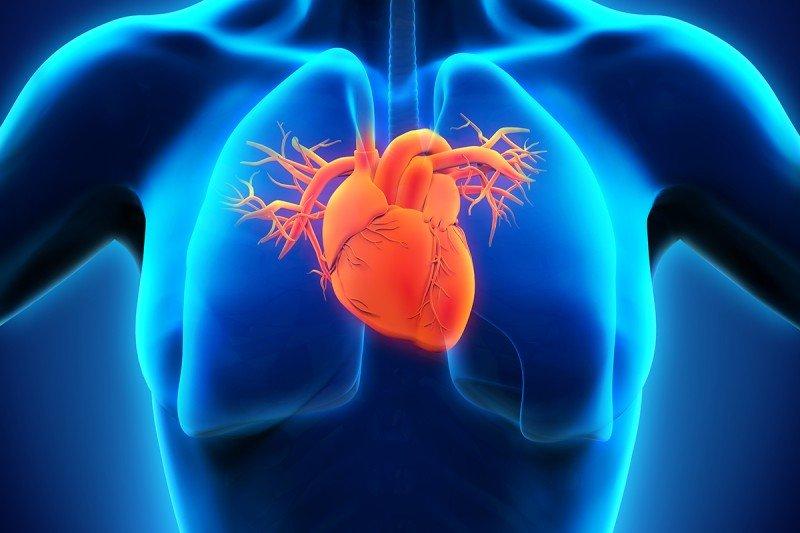3D illustration of a heart