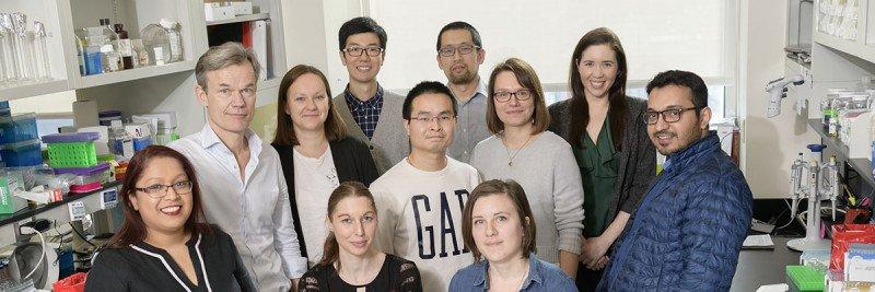 Helin Lab Group