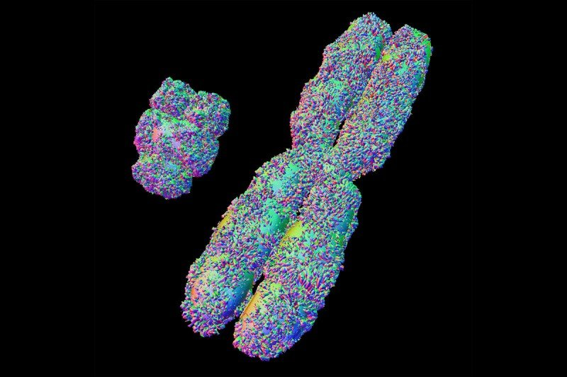 Colorful illustration of X and Y chromosome