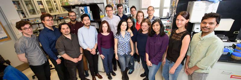 The Michel Sadelain Lab