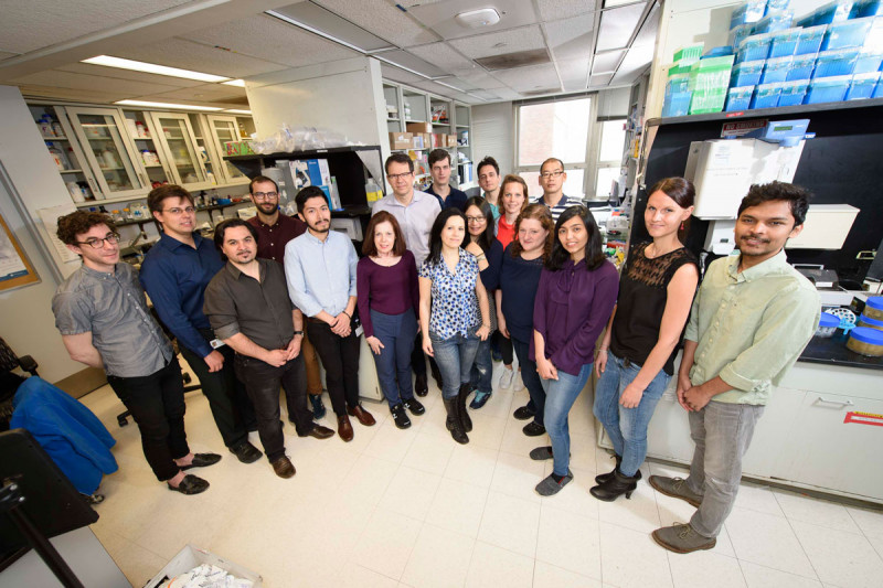 The Michel Sadelain Lab