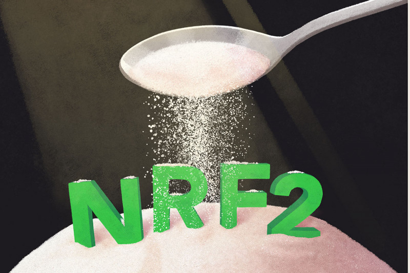An illustration of sugar pouring onto NRF2