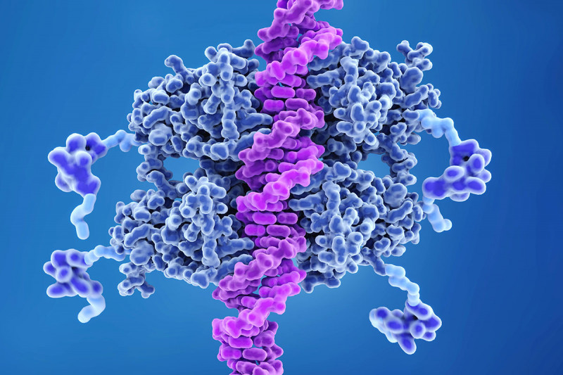 illustration of the p53 protein binding to a DNA helix
