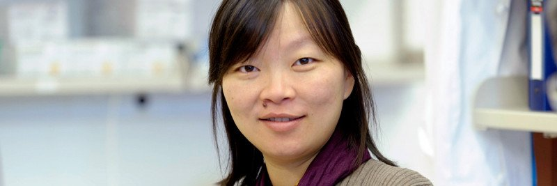 At Work: Physician-Scientist Ping Chi