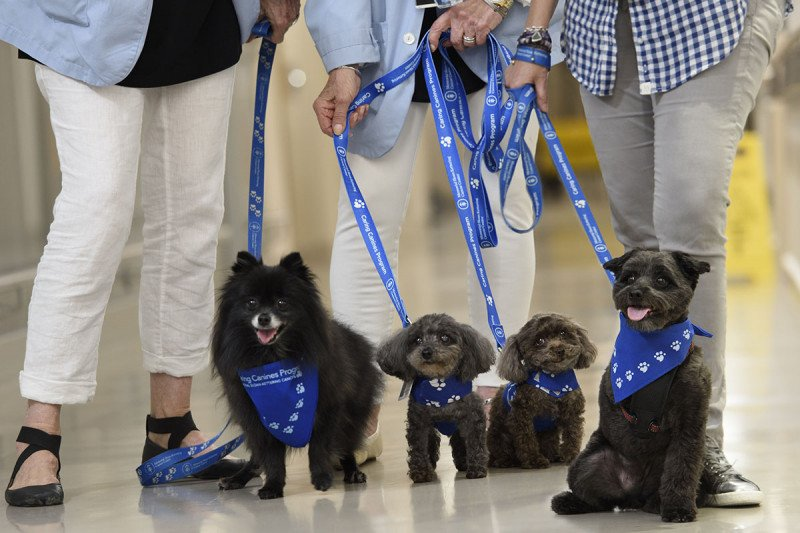 Four dogs wearing blue bandanas are held on leashes in a hallway at Memorial Hospital. Three handlers are seen only from the waist down.