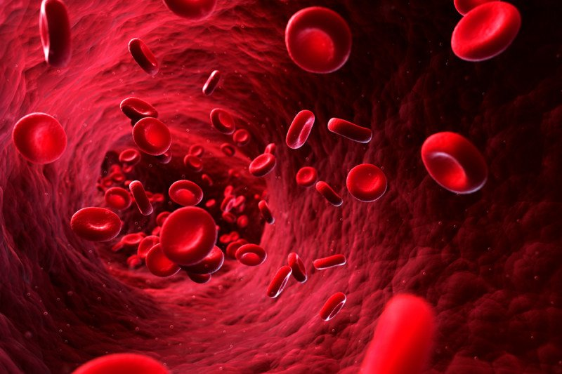 Illustration of blood cells floating in the bloodstream