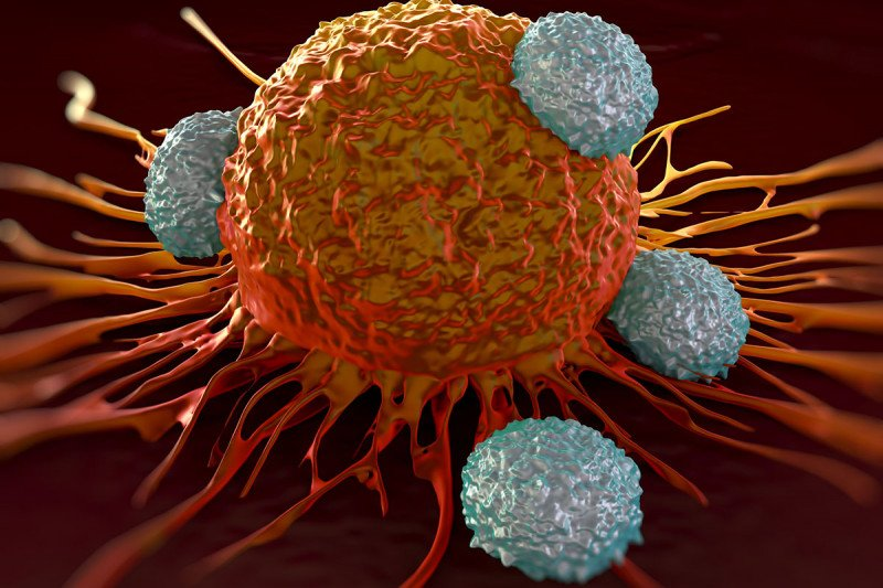 T cell attacking cancer cells